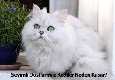Sevimli Dostlarımız Kediler Neden Kusar