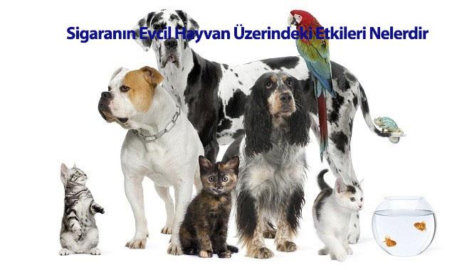 Sigaranın Evcil Hayvan Üzerindeki Etkileri