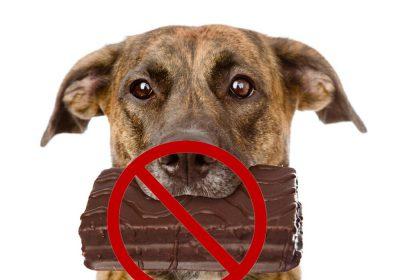 köpeklerin yememesi gerekene yiyecekler